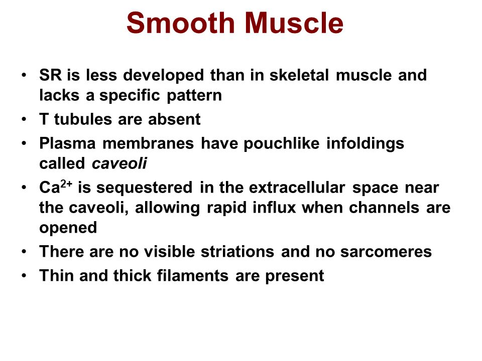 Smooth Muscle SR is less developed than in skeletal muscle and lacks a specific pattern. T tubules are absent.