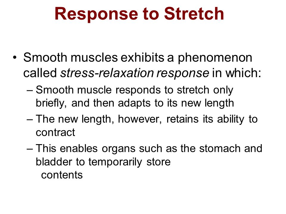 Response to Stretch Smooth muscles exhibits a phenomenon called stress-relaxation response in which: