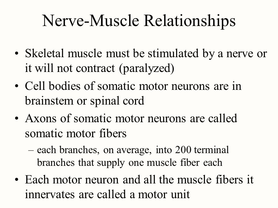 Nerve-Muscle Relationships