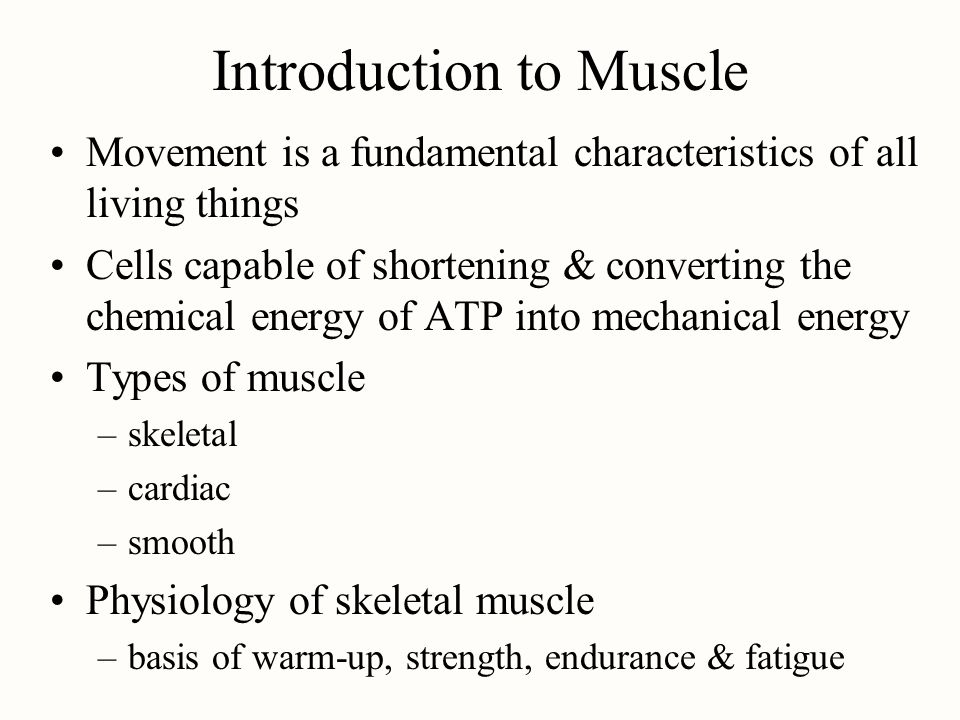 Introduction to Muscle