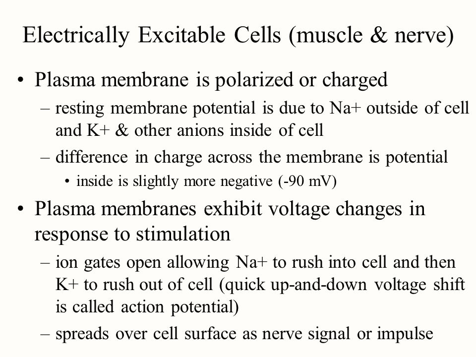Electrically Excitable Cells (muscle & nerve)