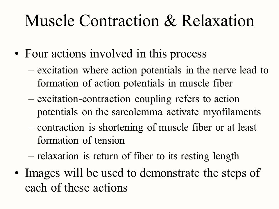 Muscle Contraction & Relaxation