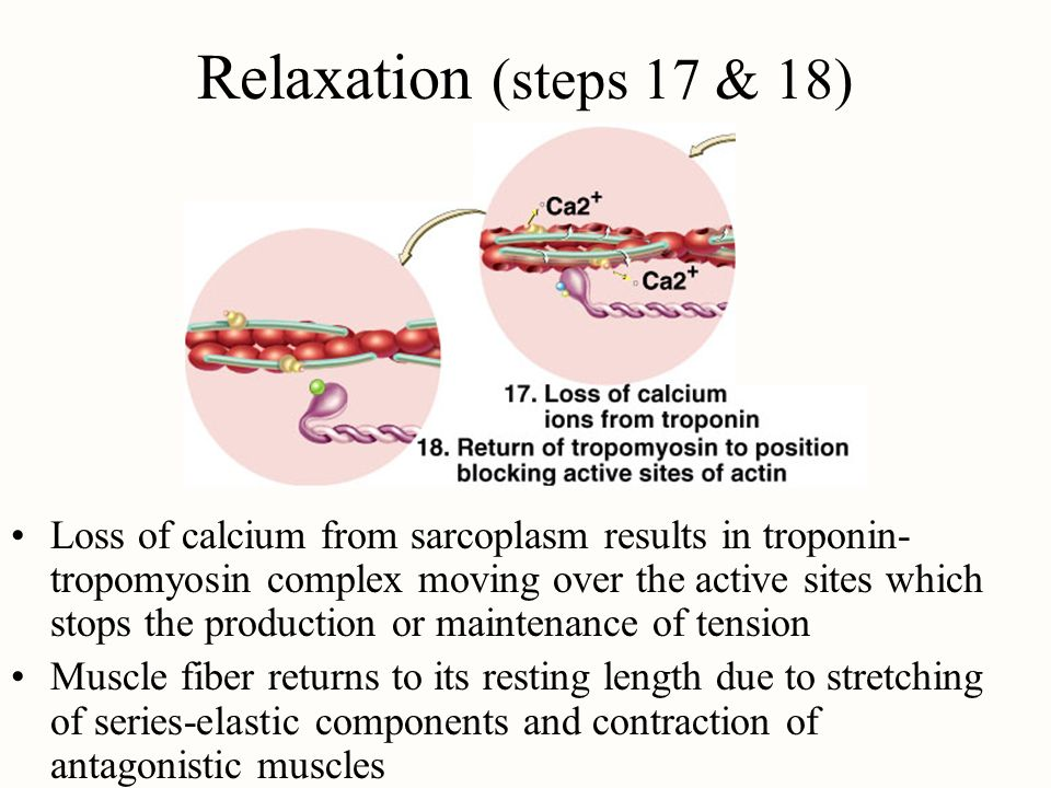 Relaxation (steps 17 & 18)