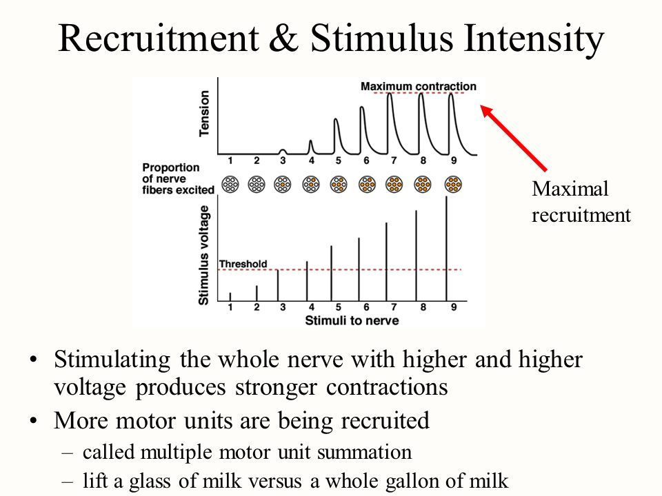 Recruitment & Stimulus Intensity