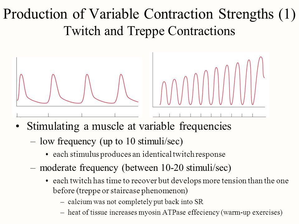 Production of Variable Contraction Strengths (1) Twitch and Treppe Contractions
