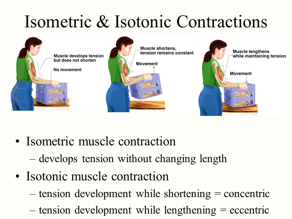 Isometric & Isotonic Contractions