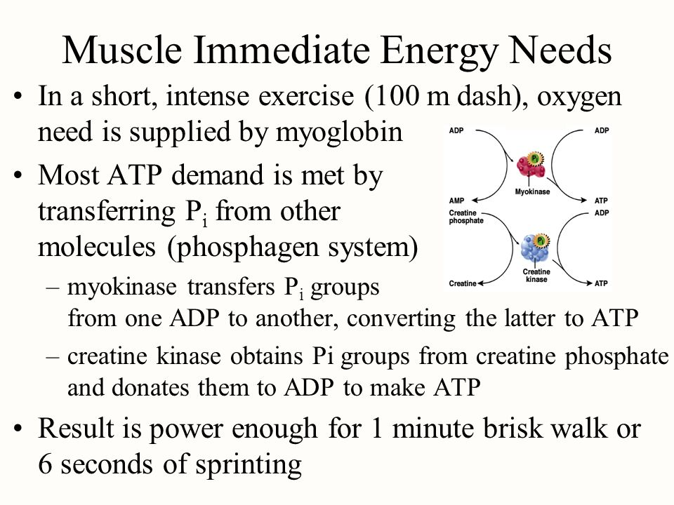 Muscle Immediate Energy Needs