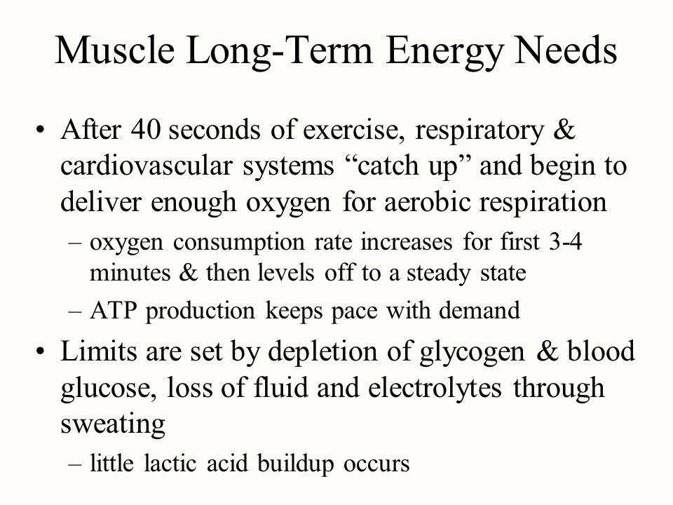 Muscle Long-Term Energy Needs