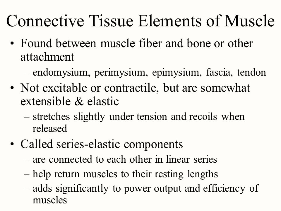 Connective Tissue Elements of Muscle