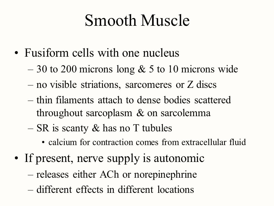 Smooth Muscle Fusiform cells with one nucleus