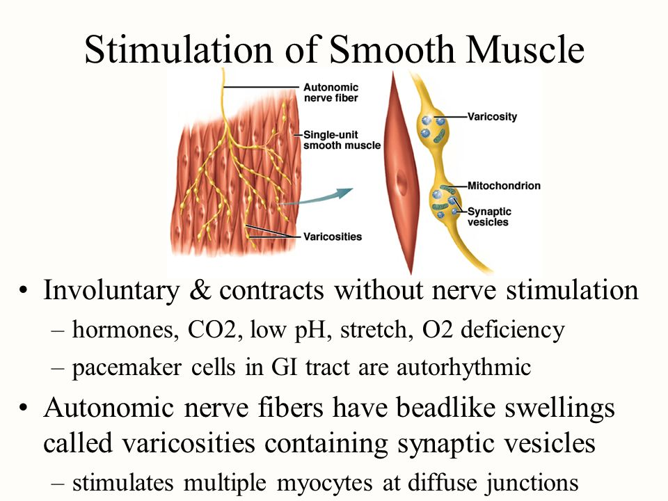 Stimulation of Smooth Muscle