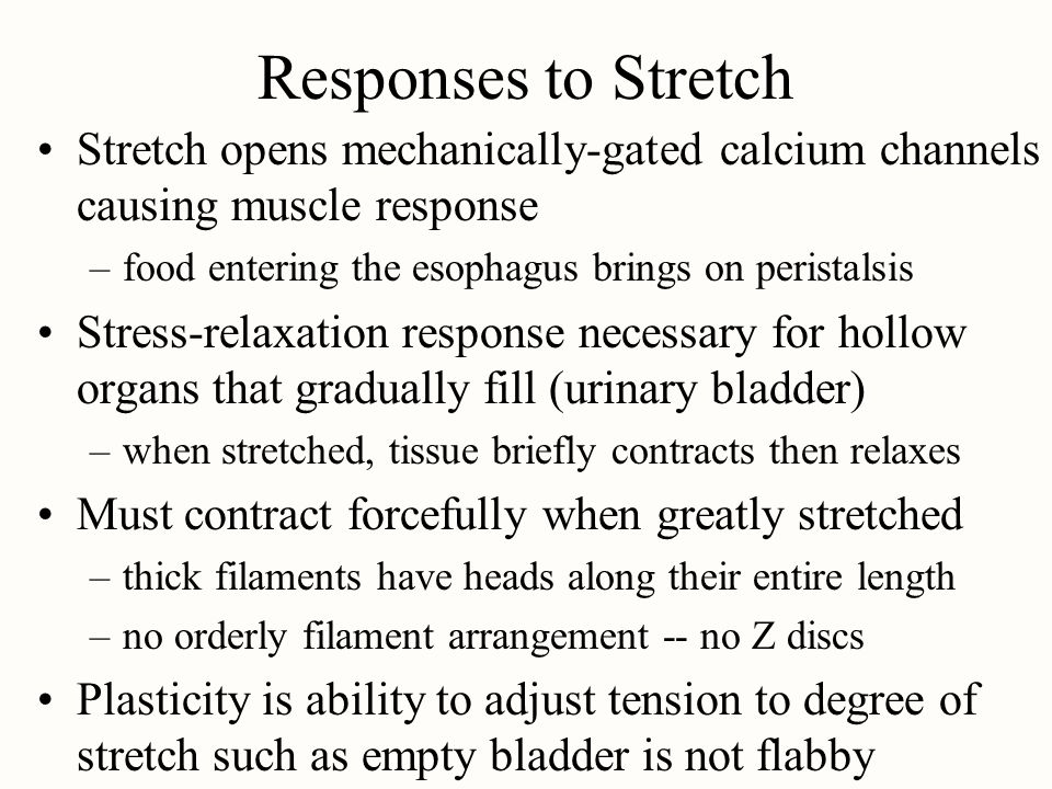 Responses to Stretch Stretch opens mechanically-gated calcium channels causing muscle response. food entering the esophagus brings on peristalsis.