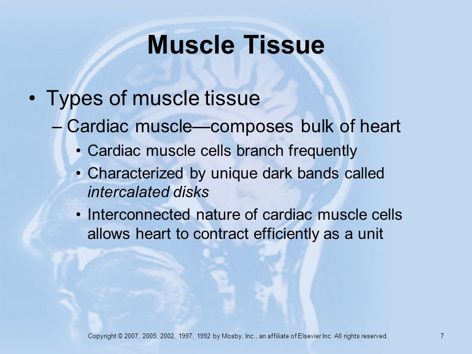 Muscle Tissue Types of muscle tissue