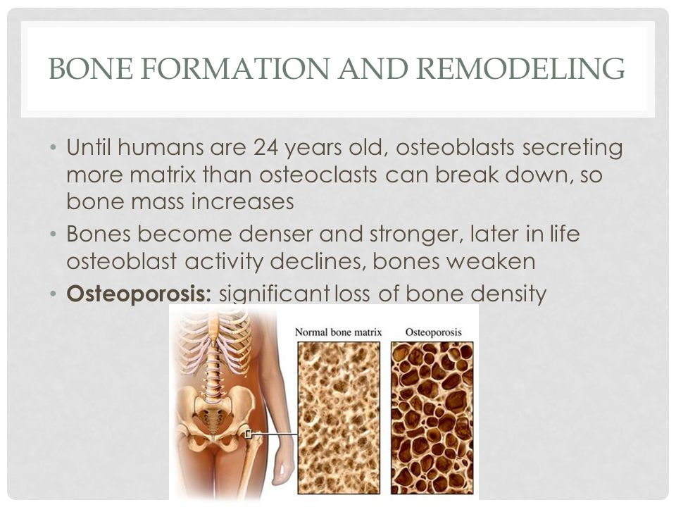 Bone Formation and Remodeling