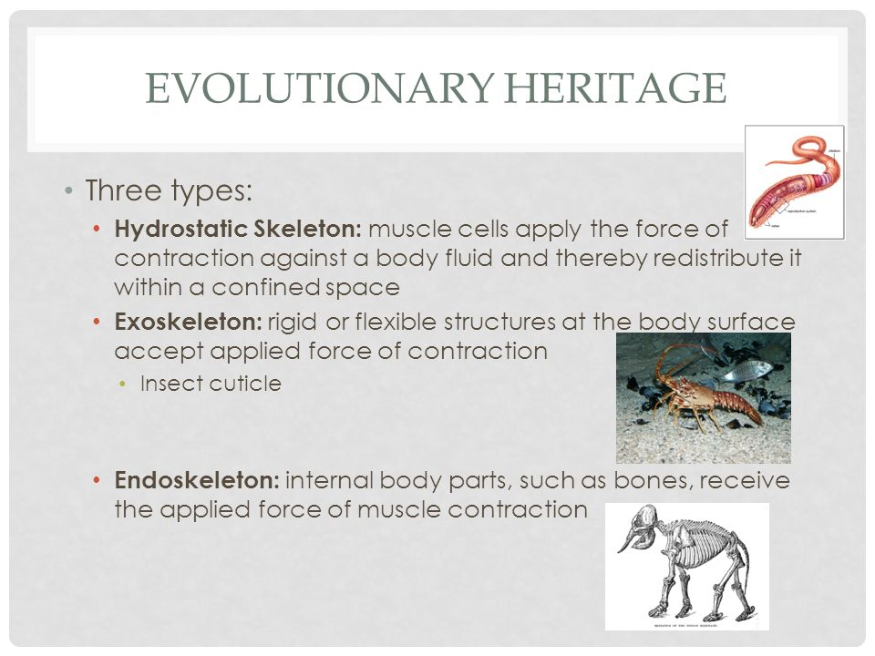 Evolutionary Heritage