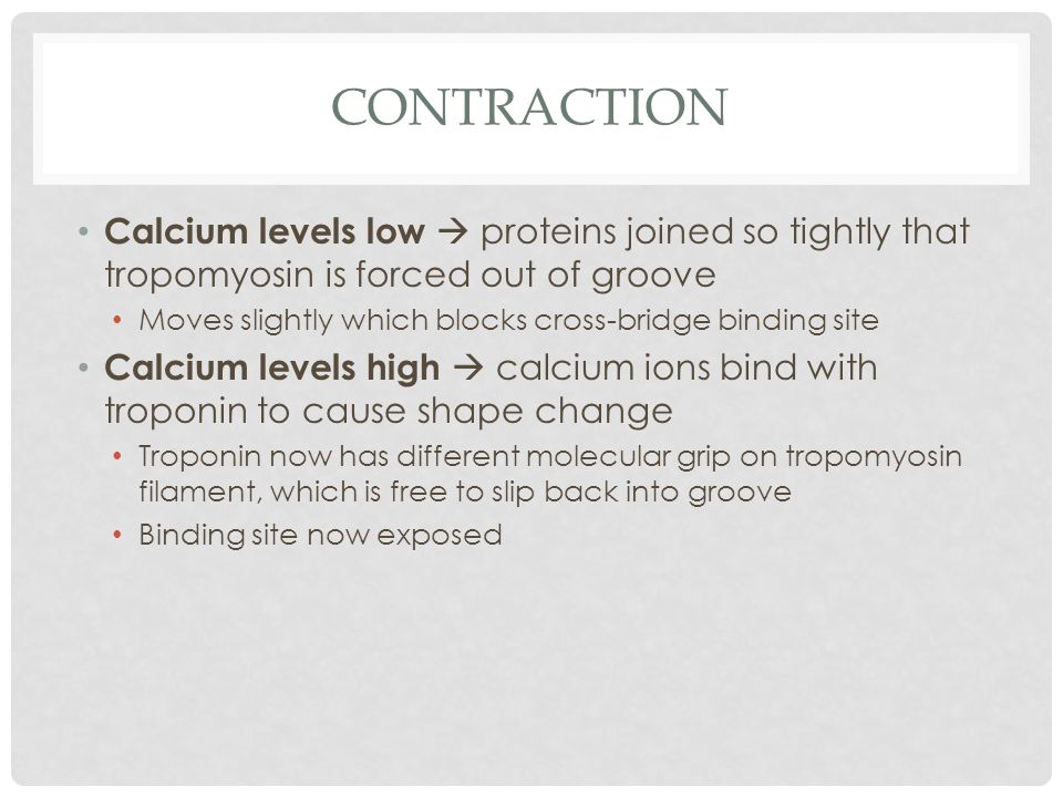Contraction Calcium levels low  proteins joined so tightly that tropomyosin is forced out of groove.