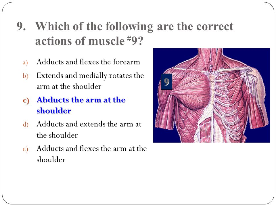 9. Which of the following are the correct actions of muscle #9