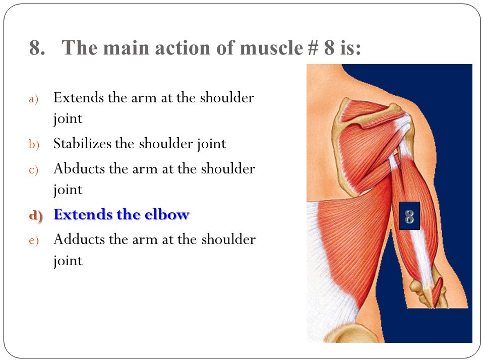 8. The main action of muscle # 8 is: