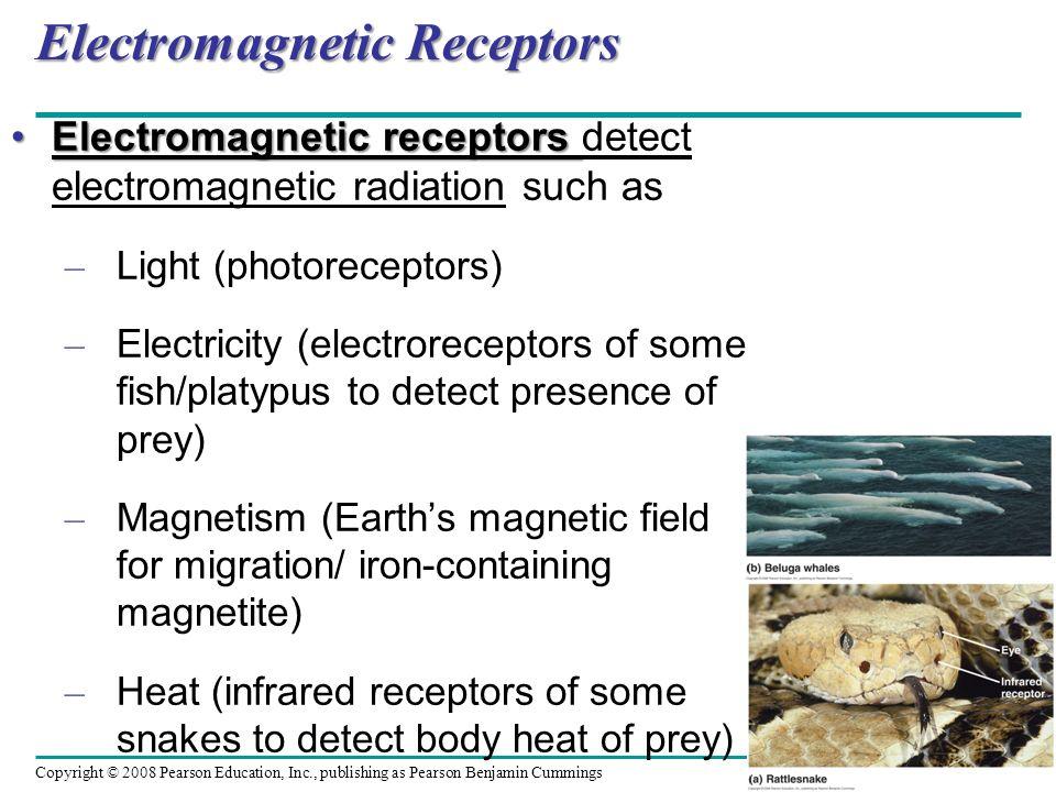 Electromagnetic Receptors