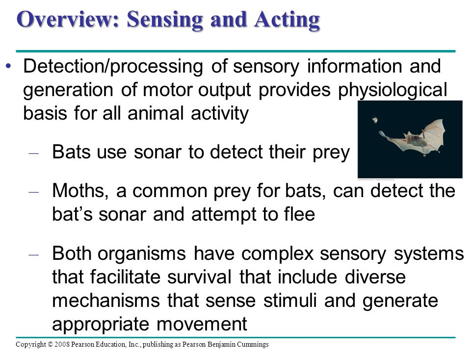 Overview: Sensing and Acting