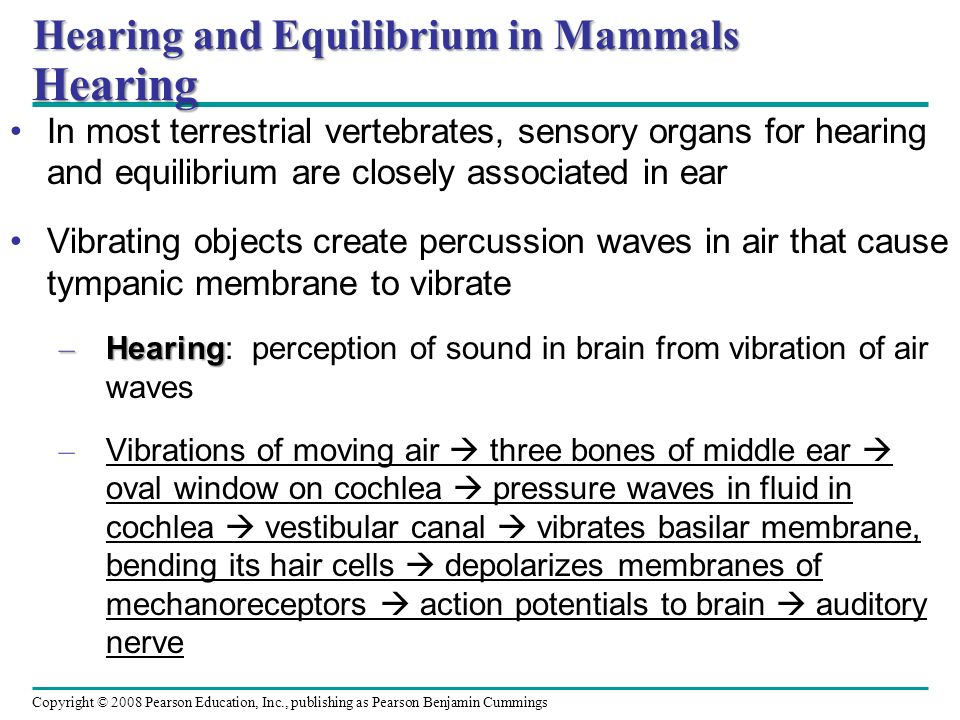 Hearing and Equilibrium in Mammals Hearing