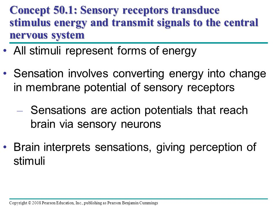 Concept 50.1: Sensory receptors transduce stimulus energy and transmit signals to the central nervous system