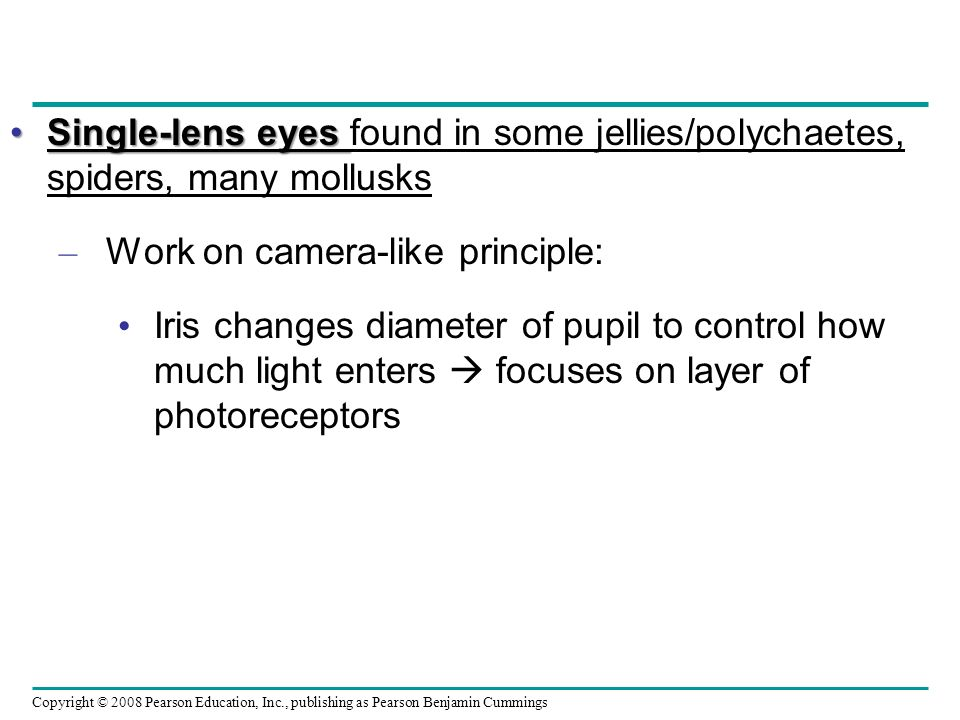 Single-lens eyes found in some jellies/polychaetes, spiders, many mollusks