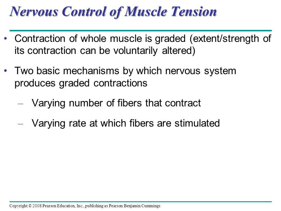 Nervous Control of Muscle Tension