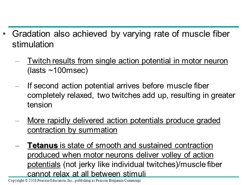 Gradation also achieved by varying rate of muscle fiber stimulation
