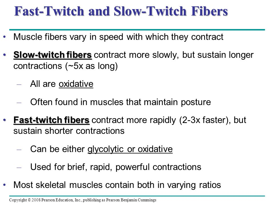 Fast-Twitch and Slow-Twitch Fibers