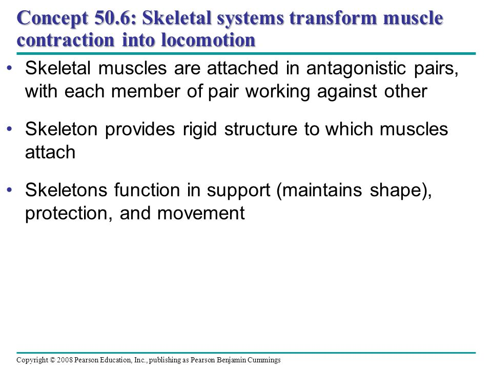 Concept 50.6: Skeletal systems transform muscle contraction into locomotion