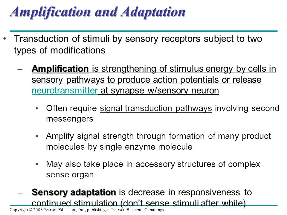 Amplification and Adaptation