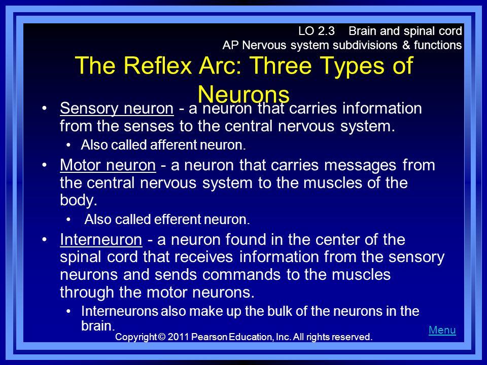 The Reflex Arc: Three Types of Neurons