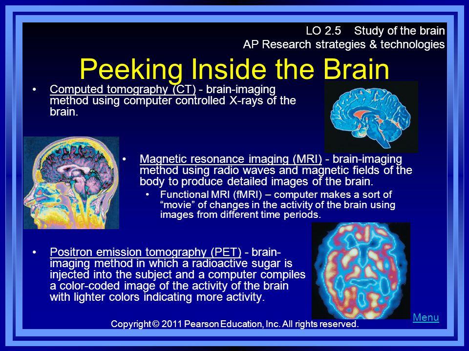 Peeking Inside the Brain