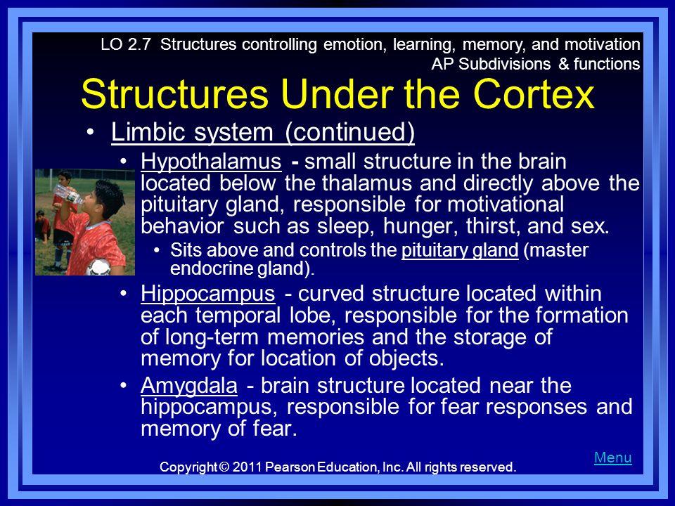 Structures Under the Cortex