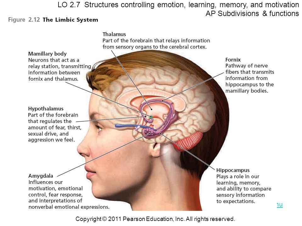 AP Subdivisions & functions