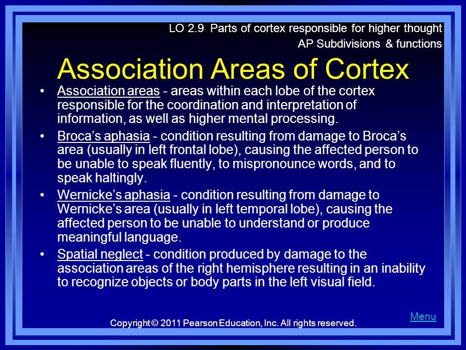 Association Areas of Cortex
