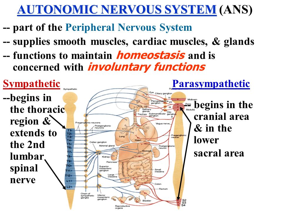 functions and dysfunction of the nervous