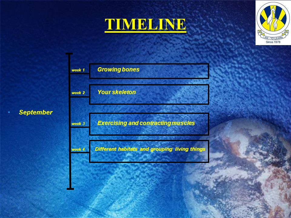 TIMELINE September week 1 Growing bones week 2 Your skeleton