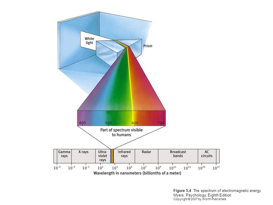 Figure 5.4 The spectrum of electromagnetic energy Myers: Psychology, Eighth Edition Copyright © 2007 by Worth Publishers