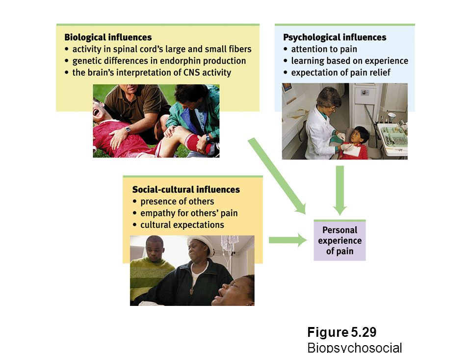 Figure 5.29 Biopsychosocial perspective on pain Myers: Psychology, Eighth Edition Copyright © 2007 by Worth Publishers
