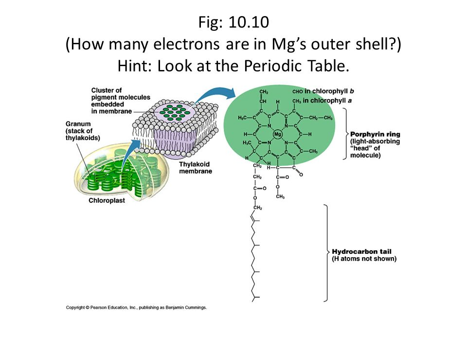 Fig: 10. 10 (How many electrons are in Mg's outer shell