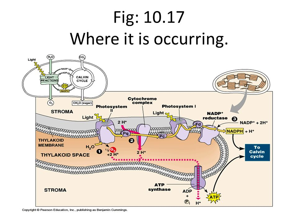 Fig: Where it is occurring.