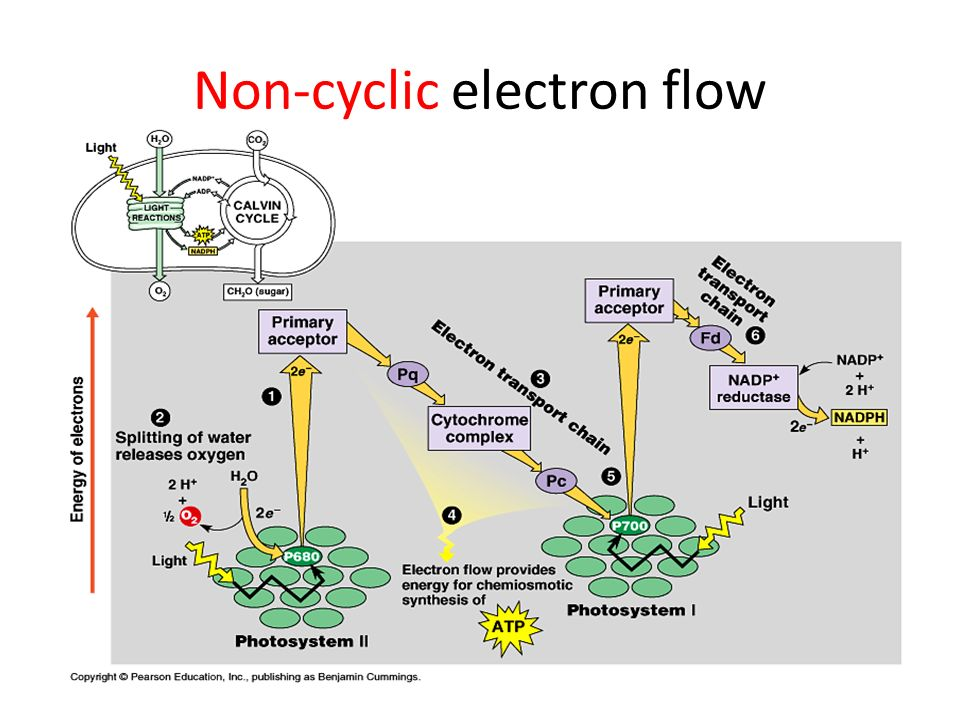 Non-cyclic electron flow