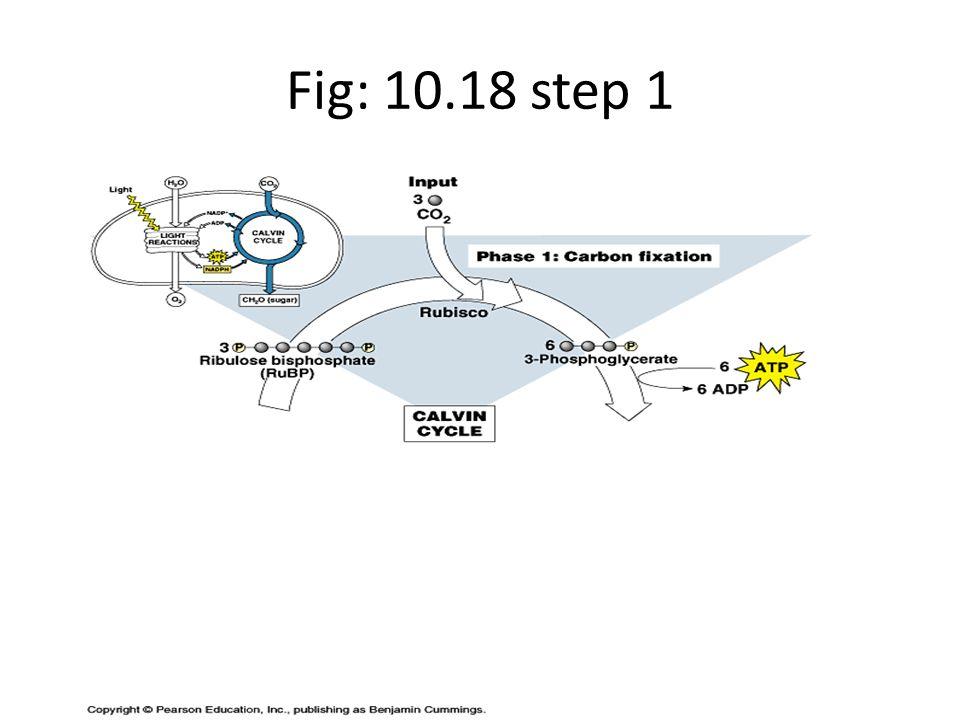 Fig: 10.18 step 1