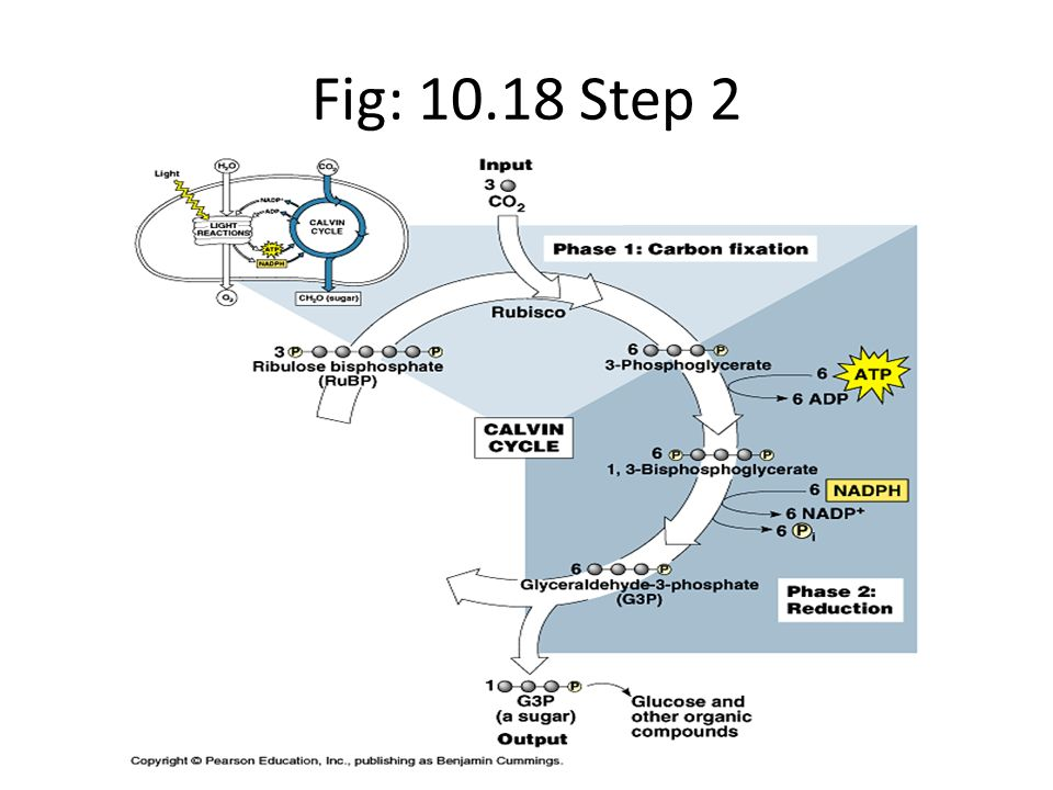 Fig: 10.18 Step 2