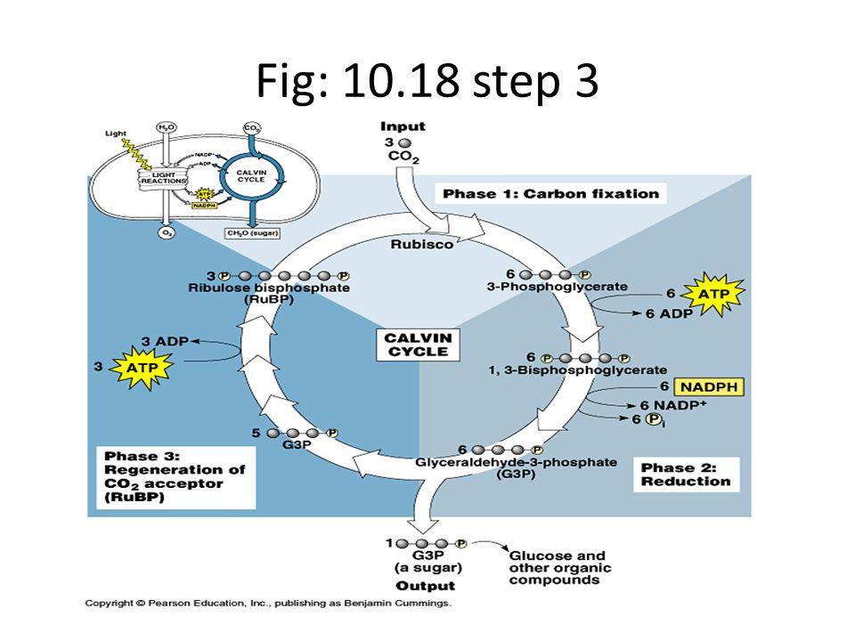 Fig: 10.18 step 3