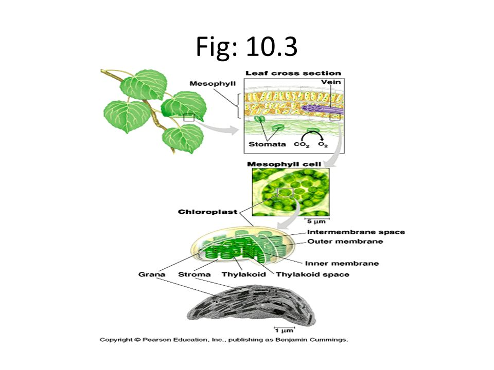 Fig: 10.3