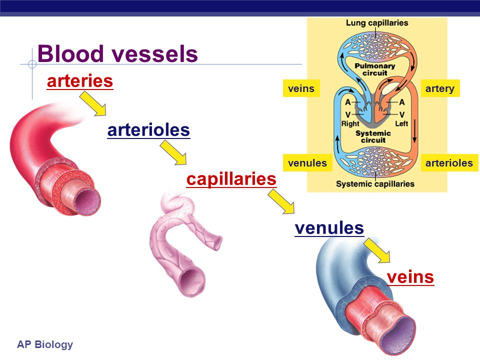 Blood vessels arteries arterioles capillaries venules veins veins