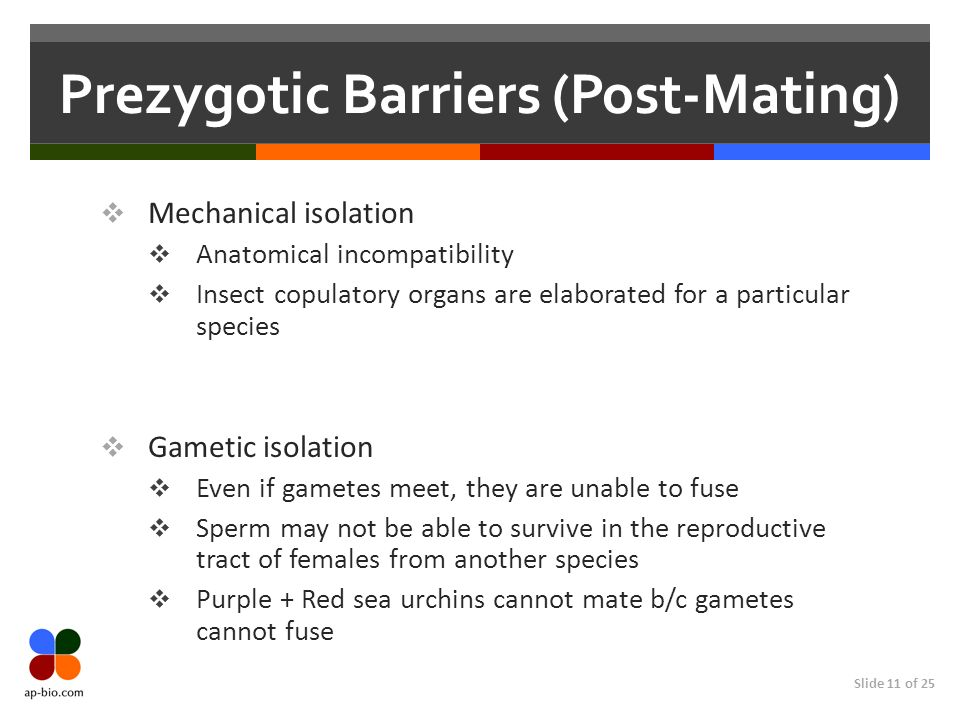 Prezygotic Barriers (Post-Mating)